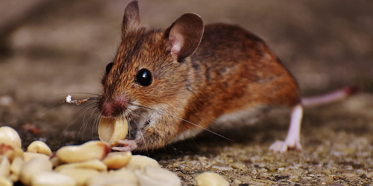 Provisions of Pest Control Service
